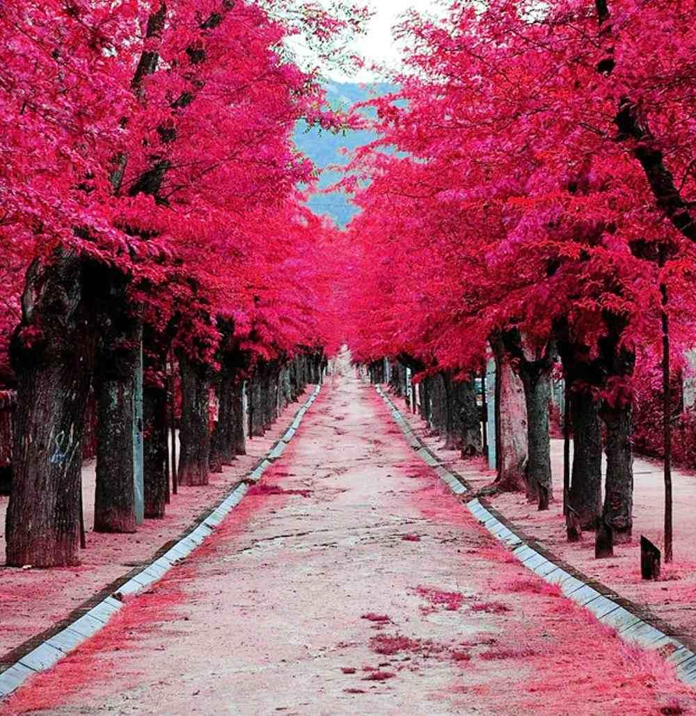 el-escorial-arboles rosa